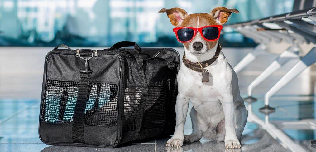 Como emigrar con mascotas a Chile